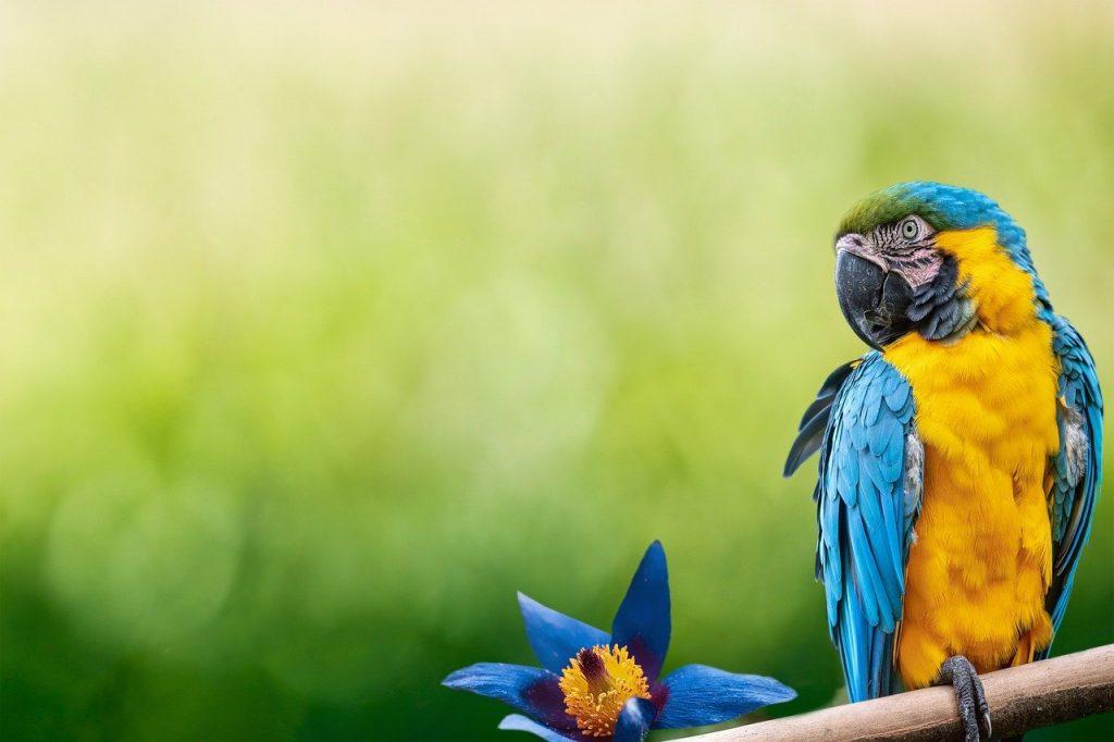 parrot, bird, beak
