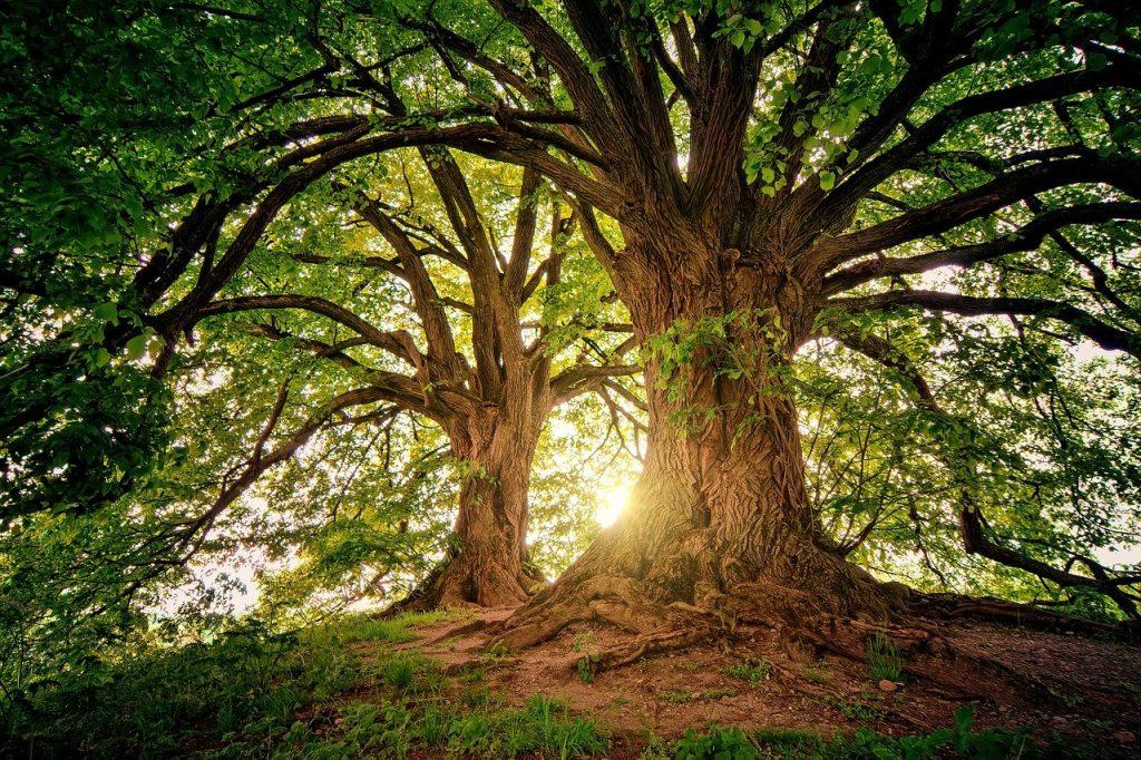 trees, wilderness, nature-3822149.jpg
